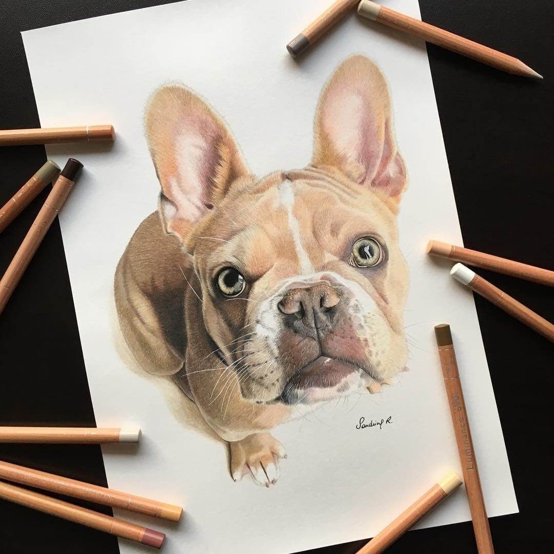 13-French-Bulldog-Frenchie-Sandrine-R-Sweet-Realistic-Animal-Portrait-Drawings-www-designstack-co
