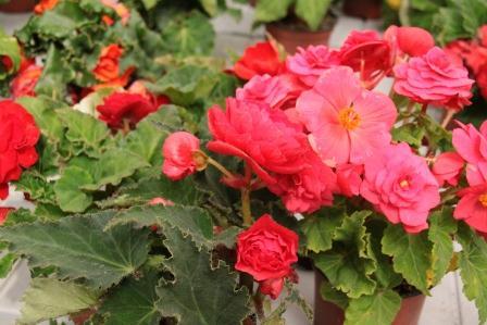 Flores De Sombra Exterior Latest Latest Simple Plantas De Exterior - Flores-de-sombra