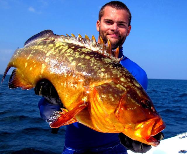 معركة الصيد في أعماق البحار