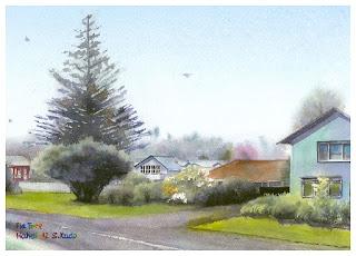 モミの木 ニュージーランド 水彩