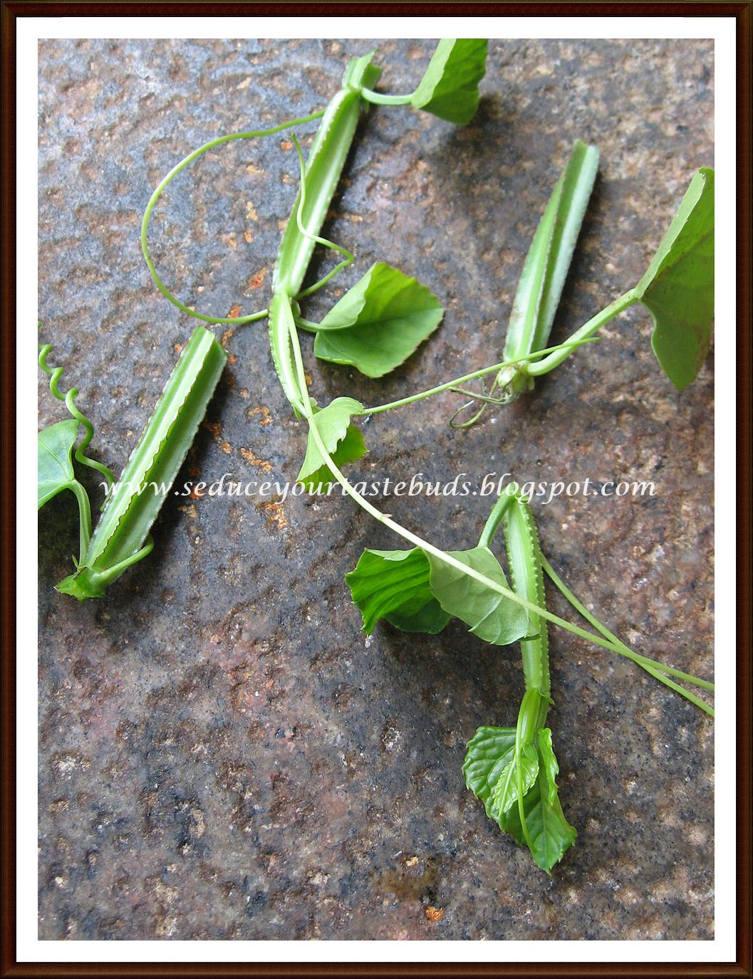 Veldt Grape Cissus Quadrangularis: Seduce Your Tastebuds...: Pirandai Thuvayal / Pirandai Chutney
