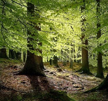 Les forêts européennes se sont réduites sur les 6000 dernières années