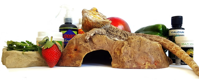 bearded dragon diet - Tips