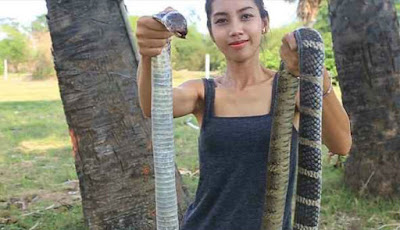 Wanita cantik juga makan ular king kobra.