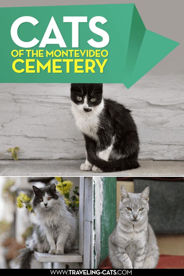 montevideo cemetery