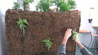 plantation mur végétal sphaigne bac inox
