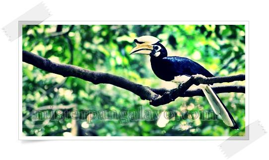 Misteri Keramat Burung Desa Gapura - Sambas