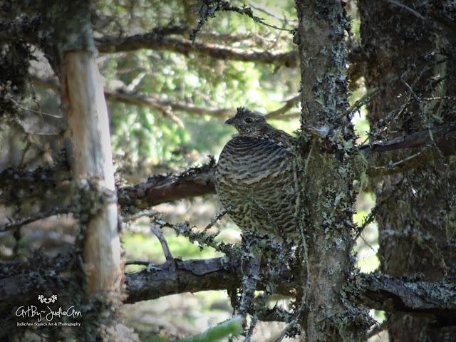 Newfoundland Wildlife