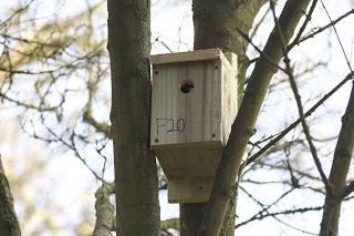 Nest box by Noah Walker