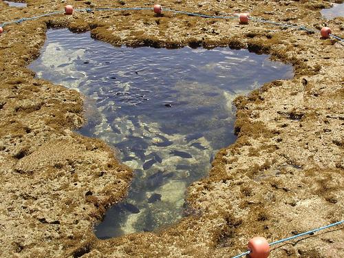 Desenho formado na maré baixa nos arrecifes de Porto de Galinhas - PE