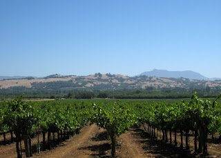 Rows of grapevines with hills in the background, Westside Road, Healdsburg, California