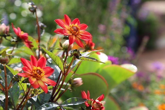 hoa dại đẹp nhất 10