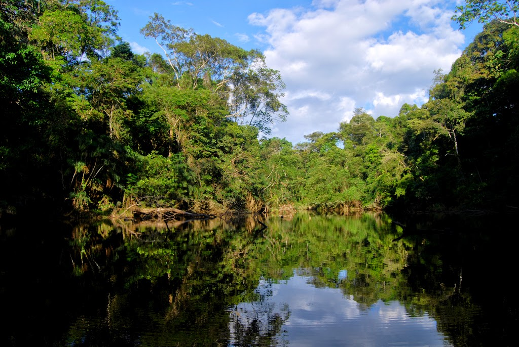 http://upload.wikimedia.org/wikipedia/commons/a/a7/Flickr_-_ggallice_-_Oxbow_lake,_Yasuni.jpg