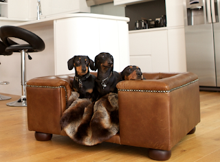 fashion and pets - designer london dog beds