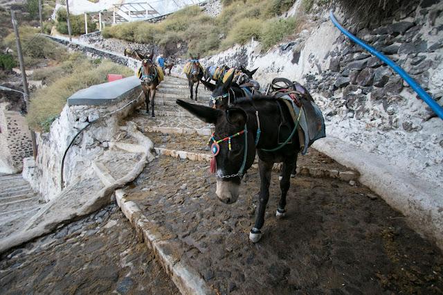 Asini sugli scaloni del Porto di Santorini