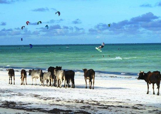 10 fotos abusadas de vacas na praia