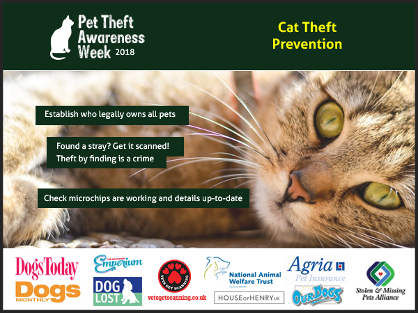 Pet Theft Awareness advice for cat owners
