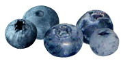Blueberry Fruit with Super Antioxidants and Anti-inflammatories