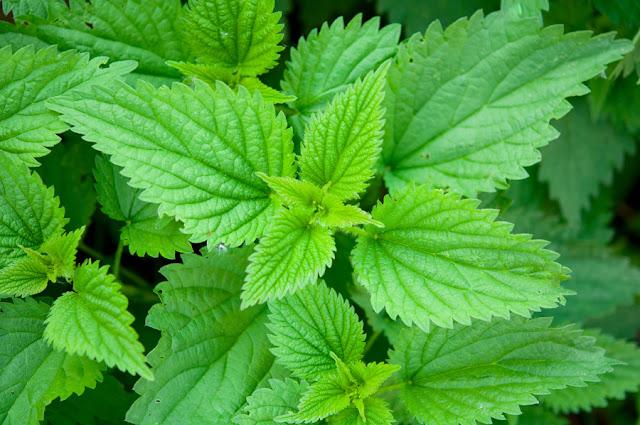 4 أعشاب مفيدة لعلاج سرطان الرحم