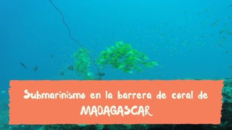buceo madagascar barrera de coral