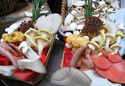 Various varieties of attractive mushrooms in baskets