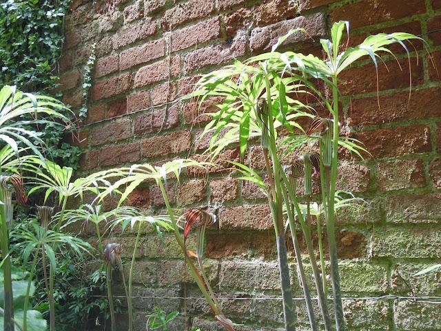pod ceglanym murem w ogrodzie