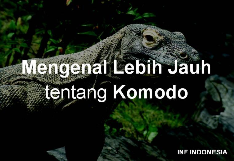 930 Contoh Gambar Hewan Komodo Gratis Terbaru