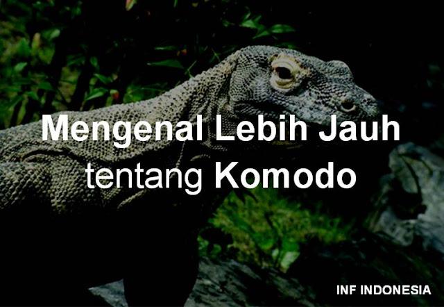 Mengenal Lebih Jauh tentang Komodo http://infindonesia.blogspot.co.id/2016/02/mengenal-lebih-jauh-tentang-komodo.html