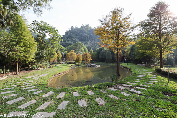 台中太平|太平落羽松秘境|太平苗圃|湖光山色美麗倒影|近東汴國小