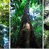 O Brasil possui a maior diversidade de árvores do mundo!