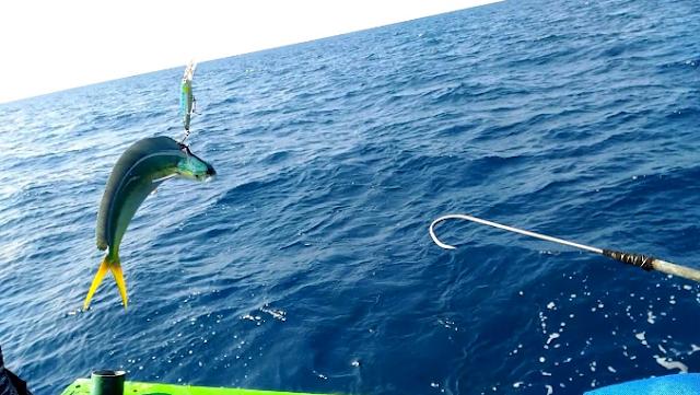 Teknik Memancing Ikan agar Dapat Banyak
