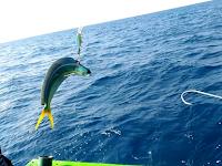Rahasia Dan Teknik Memancing Ikan agar Dapat Banyak Dimanapun