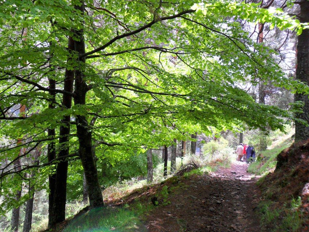 Resultado de imagen de arboreto luis ceballos