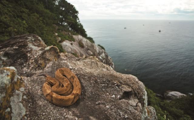 Pulau Ular Brazil