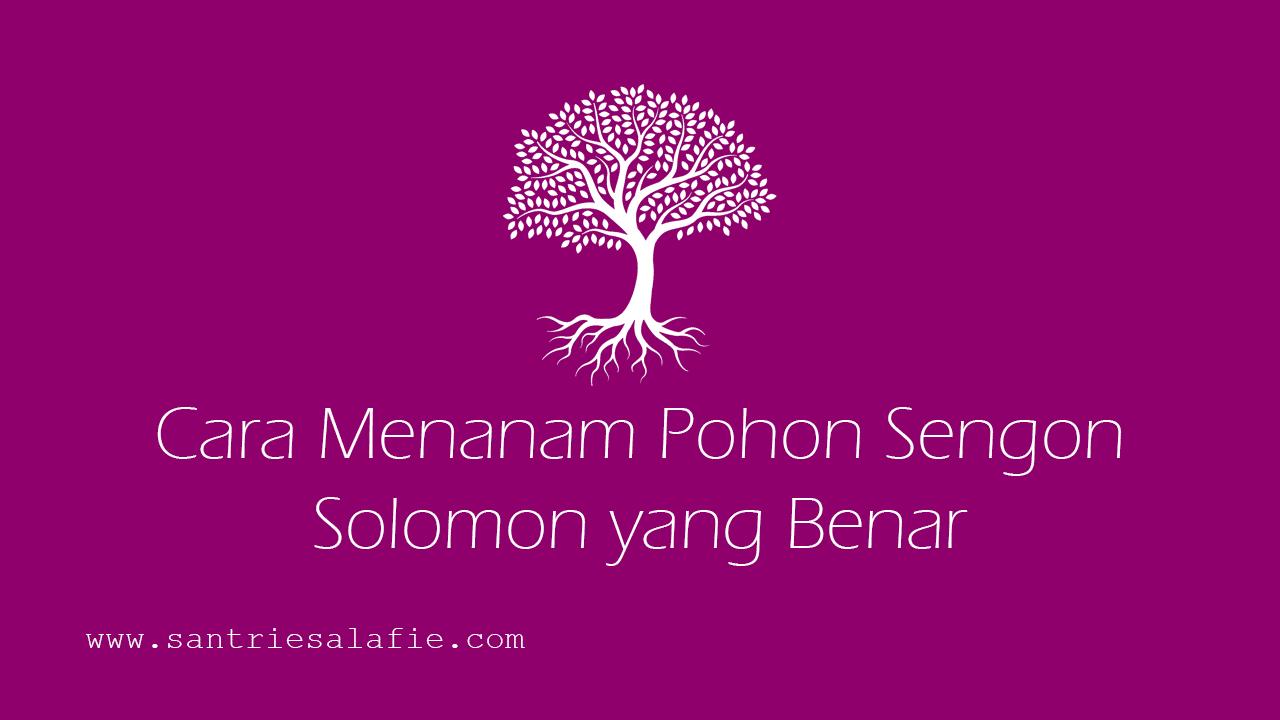 Cara Menanam Pohon Sengon Solomon yang Benar by Santrie Salafie