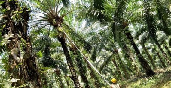 Pengusaha Beberkan Tantangan Majukan Industri Agro