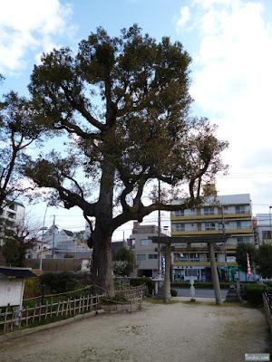 蒲田神社ご神木