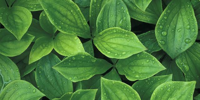 كعالم آخر مستقلٍ بذاته تحت الميكروسكوب landscape-1439490128-plants.jpg