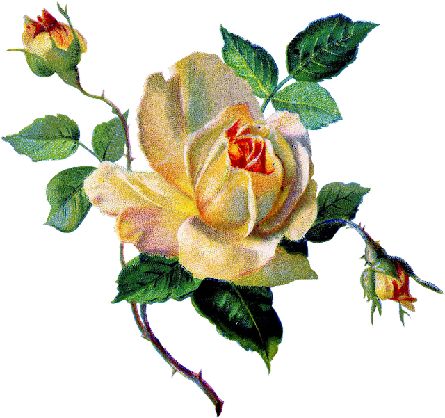 http://3.bp.blogspot.com/-_a4gGeOyVsQ/TzKqjcXL77I/AAAAAAAAOZo/Dk_kRZCI3LM/s1600/yellow+rose+vintage+image+graphicsfairy006b.png