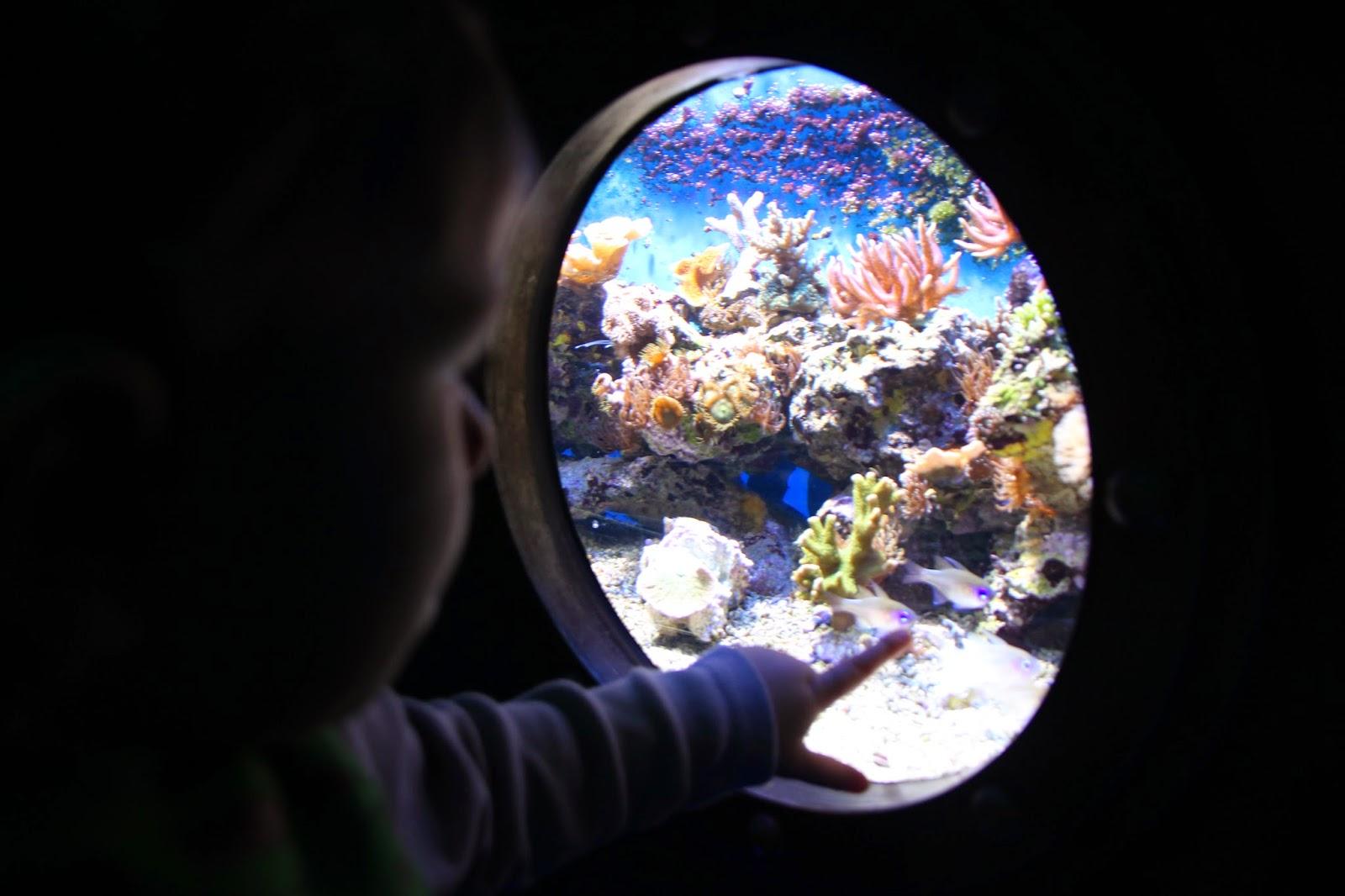 Kleinkind zeigt auf beleuchtetes Aquarium in der Biosphäre Potsdam