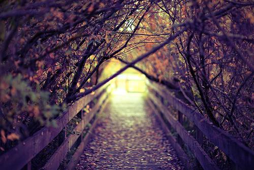 uma ponte com estrada cheia de arvores
