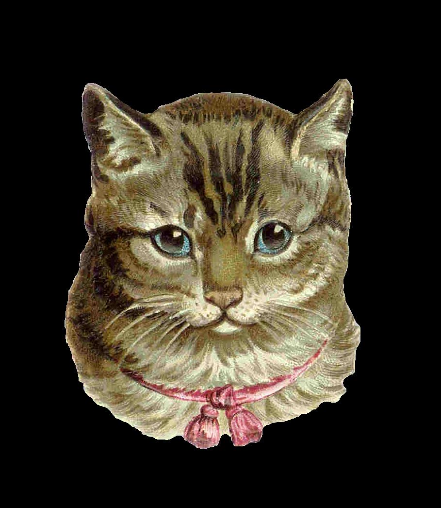 Vintage Cat 26