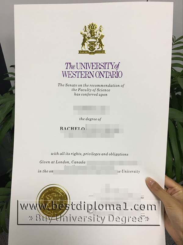 buy UWO degrees replica