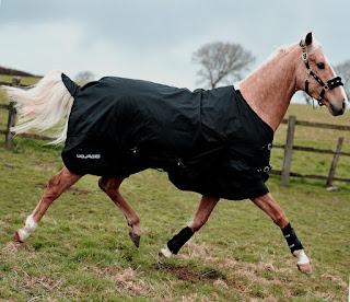 Treating horses using magnetic therapy.