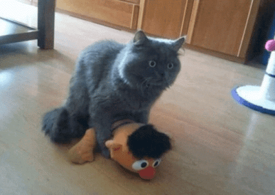 feliz día del gato