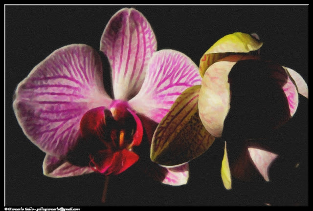 orchid flowers photographic processing 340