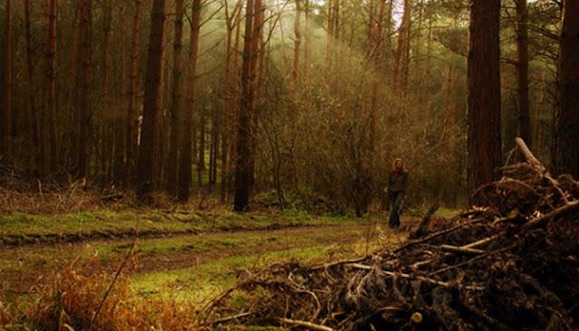 Hutan%2BWychwood - 6 Hutan Mengerikan Yang Mempunyai Sebuah Kisah Mistis