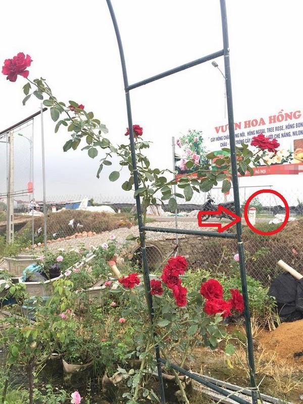 """Để hoa trước cổng chưa kịp giao cho khách, chủ vườn hốt hoảng khi bị người phụ nữ đi ô tô sang chảnh """"cầm giúp"""""""