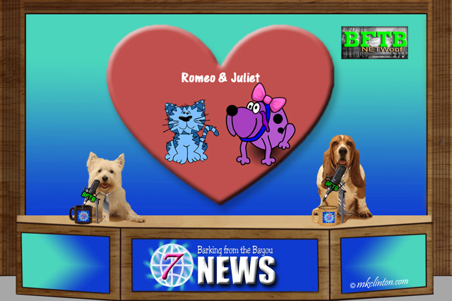 BFTB NETWoof News report on Romeo cat and Juliet dog