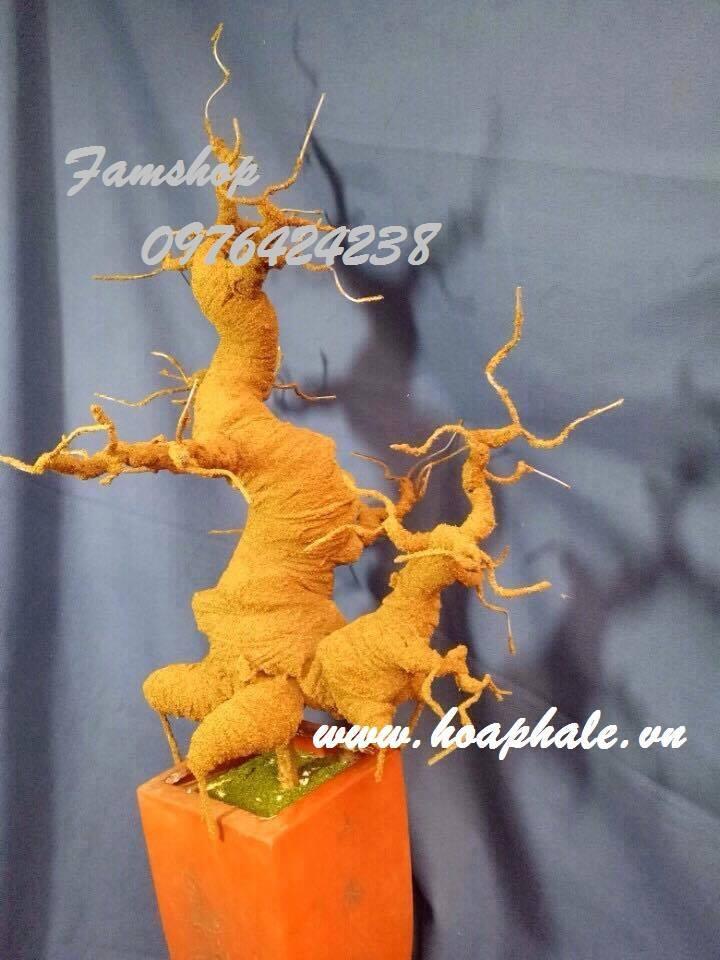 Goc bonsai mai dao o Doan Thi Diem